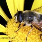 Las abejas y el fin del mundo