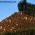 Deforestación: nos quedamos sin oxígeno